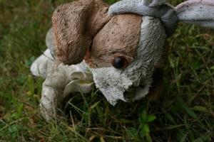 rabbit dog no nose